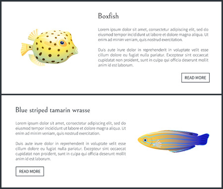 Blue striped tamarin and boxfish aquatic habitants isolated vector illustration with text sample and push buttons, marine fishes with colorful skin