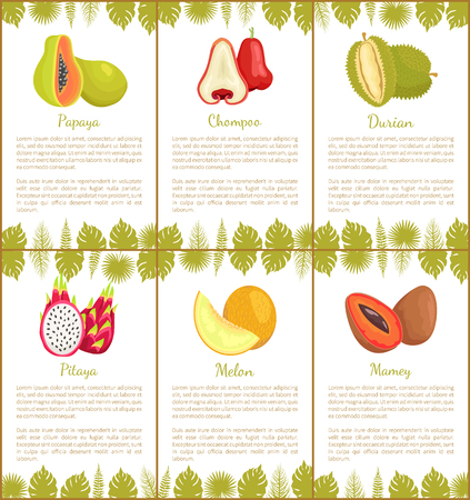 Papaya and chompoo posters set with text sample and tropical plants leaves decoration. Pitaya and mamey, melon and durian exotic fruits slices vector