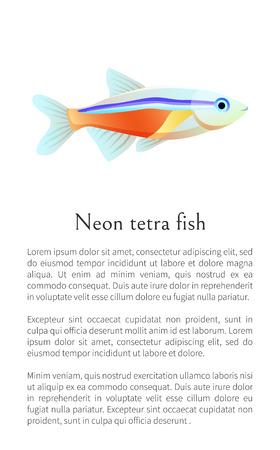 Neon Tetra Aquarium Fish Isolated on White Graphic