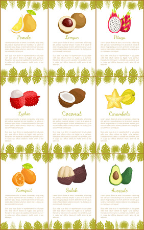 Pomelo and longan set posters with text sample and decorative foliage vector. Avocado and exotic lychee, carambola and salak, kumquat pitaya food