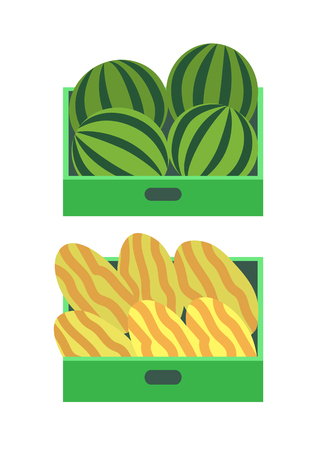 Melon and watermelon summer fruits in sellers boxes. Berries store with juicy organic food, dieting and healthy meal at market. Fresh exotic products Illustration