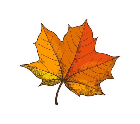 Maple Leaf Autumn Season Period Isolated Vector