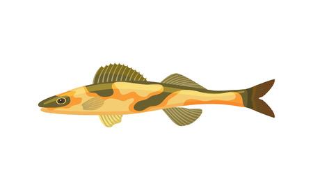 Cirrhitops fasciatus Hawaiian hawkfish with dorsal fin dark spots on body. Tropical limbless animal marine creature isolated on vector illustration