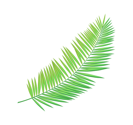 Areca butterfly palm leaf isolated icon closeup vector. Green foliage of tropical plant, household exotic type. Decorative greenery element for summer decor