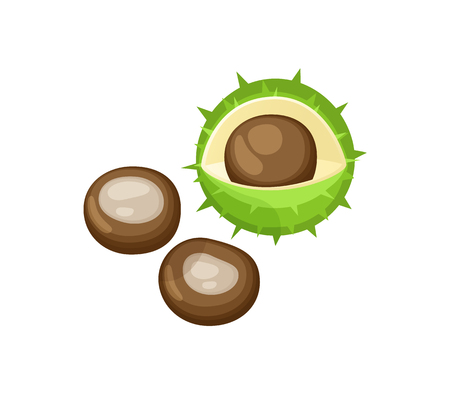 Chestnut Kernel and Peel Set Isolated Icons Vector Иллюстрация