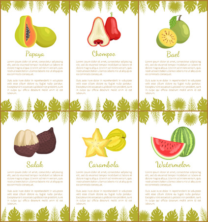Papaya and salak posters set with text sample vector. Chompoo and bael, carambola slices star exotic fruit and watermelon with seeds. Monstera leaves Illustration