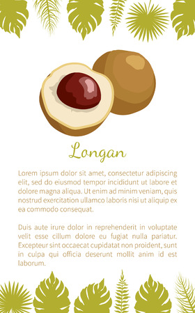 Longan exotic juicy fruit from plant related to litchi vector poster with text sample and palm leaves. Tropical food, dieting vegetarian grocery banner