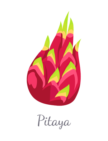 Pitaya Pitahaya Exotic Juicy Fruit Vector Isolated