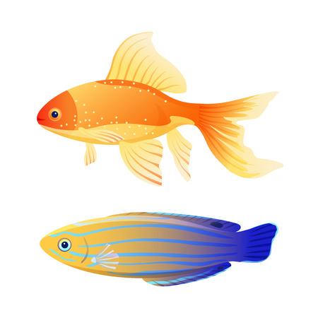 Rare blue striped tamarin wrasse and common aquarium goldfish depiction. Popular marine animal flat color illustration for educational page in journal