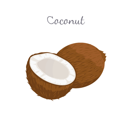 Coconut exotic fruit whole and cut vector isolated on white. Tropical food, plant in brown shell, dieting milk for cocktails inside, vegetarian coco icon