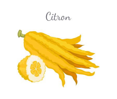 Citron Exotic Juicy Large Fragrant Citrus Fruit