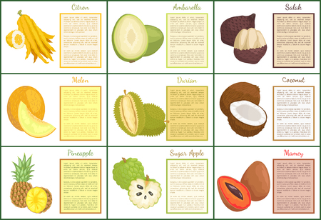 Citron and salak fruits posters with text set vector . Mamey and pineapple, sugar apple and durian. Melon coconut and ambarella exotic tropical food