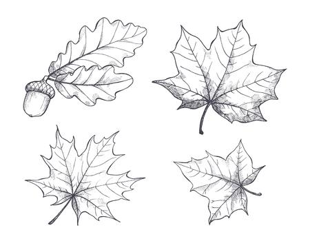 Ahornblätter Monochrome Skizzen Isolierte Vektor