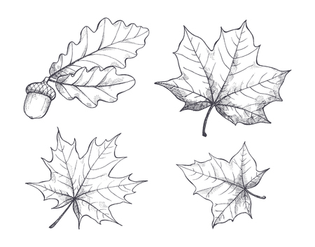 Maple Leaves Monochrome Sketches Isolated Vector