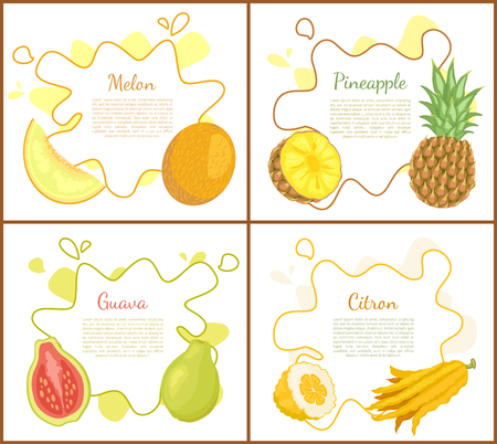 Melon and pineapple, posters with text sample. Pineapple slice of tropical products. Papaya with seeds and citron. Exotic fruits healthy food vector Illustration
