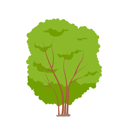 Cartoon emblem of isolated trees or tall shrub vector badge. Small wood with thin stalks and great bushy and dense crown, garden and forest theme  イラスト・ベクター素材