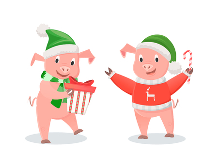 New Year piglets in Santa hats, winter holidays. Pigs in knitted scarf and sweater, gift box and cane candy, farm animals vector illustrations isolated Illustration