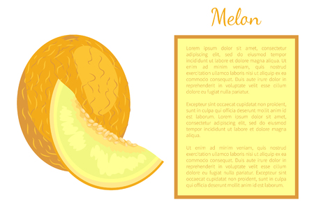 Melon exotic juicy stone fruit whole and cut vector poster frame for text. Tropical sweet edible, fleshy food, dieting vegetarian yellow dieting dessert