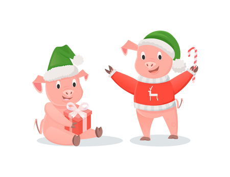 New Year pigs in Santa hats, gift box and cane candy. Piglets in knitted sweater, lollipop and present, winter holidays vector illustrations isolated