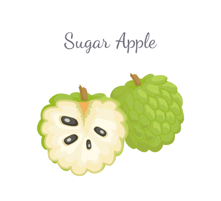 Sugar-apple, sweetsop, or custard apple, Annona squamosa, exotic juicy fruit whole and cut vector isolated. Tropical edible food, dieting vegetarian icon