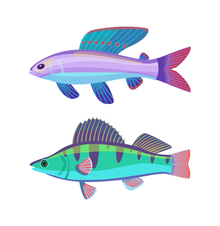 Rare aquarium wrasse specie. Violet-blue creature with spotted fin and green striped perch fish vector cartoon illustration on white background.