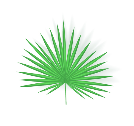 Tropical leaf isolated icon closeup with shade vector. Fan palm exotic plant foliage, chamaerops humilis. Greenery for decoration and summer design