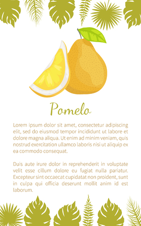 Pomelo exotic fruit vector poster text sample and palm leaves. Tropical food, similar to grapefruit or pear, dieting vegetarian citrus pumeelo