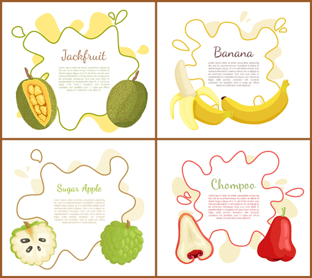 Jackfruit and sugar apple, ripe yellow banana and chompoo, posters set with text sample on blot. Natural fresh tropical fruit, exotic meal vector
