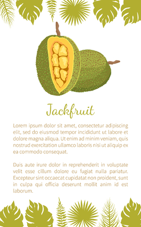 Jackfruit exotic juicy stone fruit vector poster text sample and palm leaves. Jack tree, fenne, jakfruit or jak. Fig, mulberry tropical edible food Ilustração