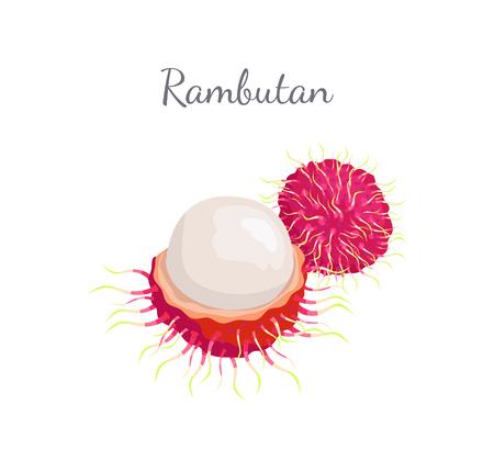 Rambutan exotic juicy stone fruit vector whole and cut isolated. Standard-Bild - 116328483