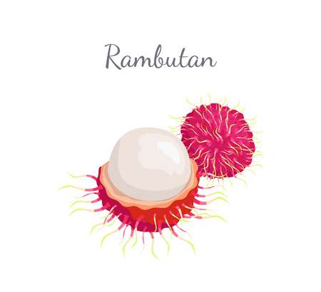 Rambutan exotic juicy stone fruit vector whole and cut isolated. Illustration