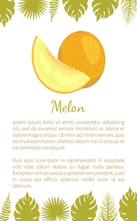 Melon exotic juicy stone fruit vector poster text sample and palm leaves. Tropical sweet edible, fleshy food, dieting veggies with vitamins, yellow dessert Çizim
