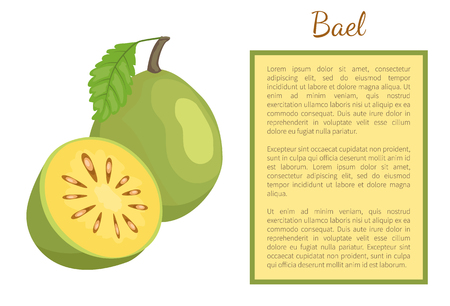 Bael exotic juicy fruit whole and cut vector poster frame for text. Aegle marmelos, Bengal quince, golden stone wood apple, topical edible food Stock Vector - 125453436