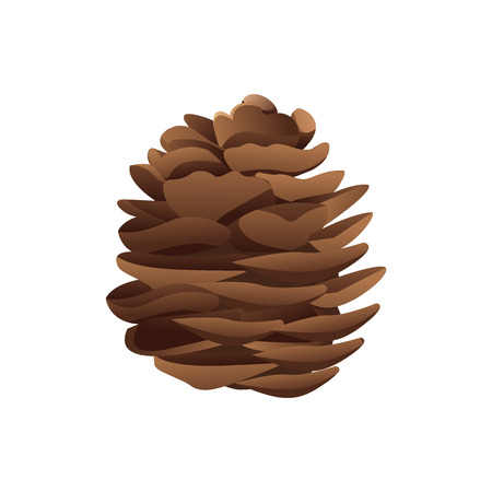Pinecone in brown color, illustration in realistic style isolated on white. Christmas spruce conifer traditional decoration, element from pine-tree vector