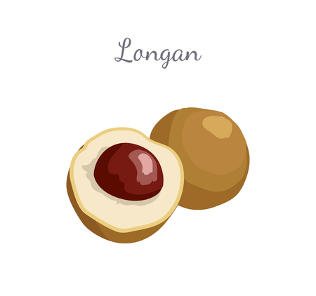 Longan exotic juicy fruit whole and cut. Plant related to litchi vector poster with frame and place for text. Tropical food, dieting vegetarian grocery