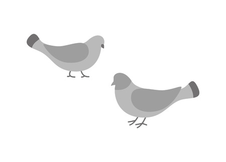 Pigeon birds, animals eating and walking on ground vector. Ilustracja