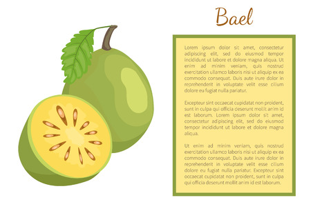 Bael exotic juicy fruit whole and cut vector poster frame for text. Aegle marmelos, Bengal quince, golden stone wood apple, topical edible food Stock Vector - 125270950