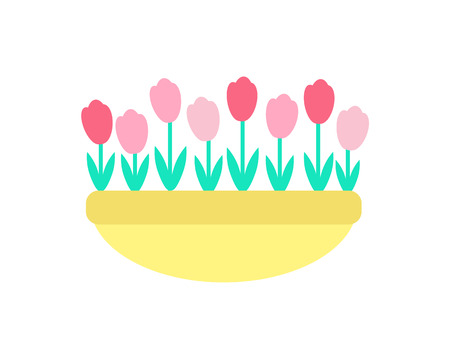 Tulips grown in clay pot vector isolated icon. Spring pink and red color flowers with green stems and leaves, growing in ground or sand, springtime decorative elements Illustration