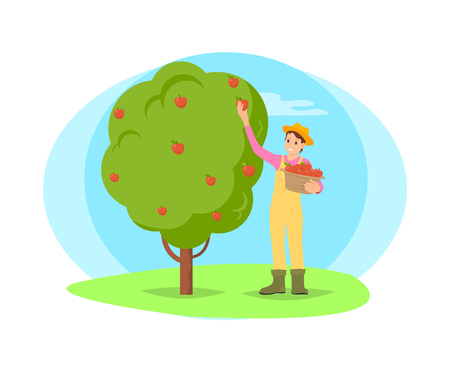 Farmer working in garden picking fruit from tree vector cartoon icon. Happy woman in hat and uniform plucking apples and put in basket, work on farm Ilustração
