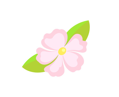 Frangipani and hibiscus, Hawaiian summer flower vector. Seasonal exotic plant, spa symbol, wild plumeria or jasmine with leaves isolated nature object Illustration