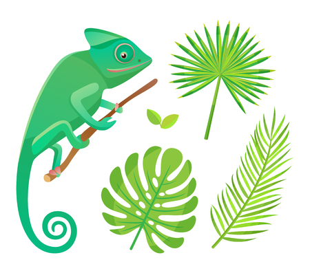 Chameleon sitting and looking on branch. Wildlife and amphibia with tail, reptile and green leaves of fern isolated on white, flora and fauna vector Ilustração