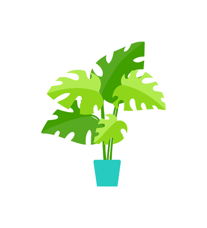 Green leafy houseplant in pot, flat tropical herb, fern with lush leaves, botanical symbol. Ilustrace