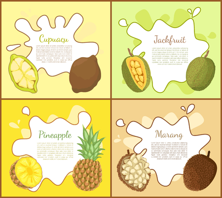 Cupuacu and jackfruit, posters set with editable text sample. Pineapple tropical fruit slice, marang exotic products full of vitamins. Lush meal vector Illustration