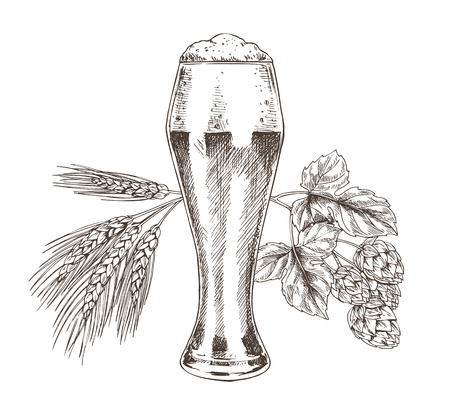 Hop and wheat stack and foamy alcohol beer in glass isolated on white. Ale in goblet and raw for tasty drink isolated on white vector illustration Ilustrace