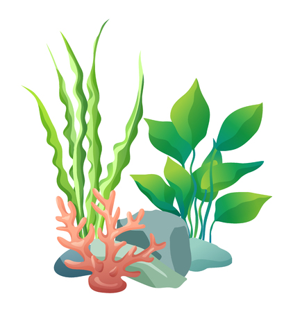 Green vegetation of deep sea. Decorations to put in aquariums. Stones with holes and plants different seaweed set isolated on vector illustration