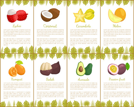 Lychee coconut and carambola tropical exotic fruits vector. Kumquat and salak, avocado and melon, organic products healthy assortment poster with text Çizim