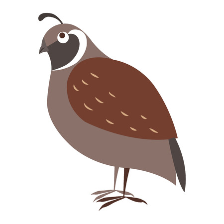 Funny cuty brown california quail vector sticker or icon isolated on white. Wild partridge bird illustration outlined with dotted line for game counters, kids books Imagens - 124220206