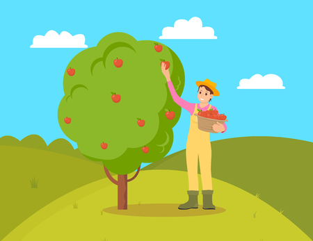 Farmer gathering apples from fruit tree. Female holding wicker basket with fresh organic natural products. Garden and harvesting working season vector
