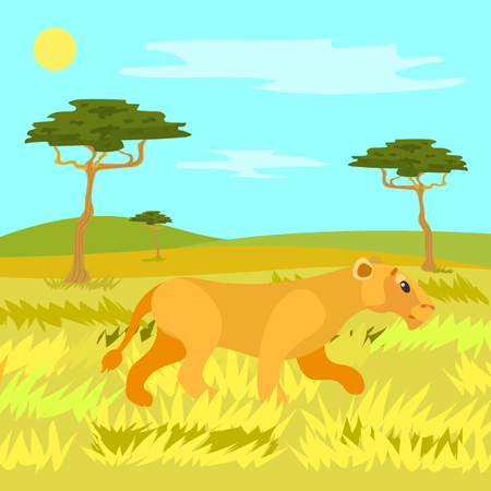 Lioness hunting vector, wildlife safari. Traveling to African countries, warm weather trees and sunshine. Wild animal running on yellow dry grass