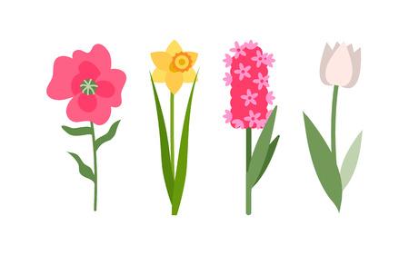 Flores iconos aislados set vector, narciso amarillo, tulipán blanco y jacinto rosa. Flor con follaje, decoración y saludo con vacaciones, botánico